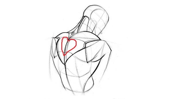 trapezius heart 1